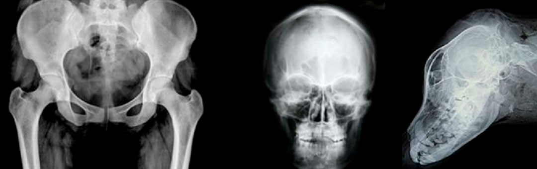 Røntgen til dyrlæger og kiropraktorer